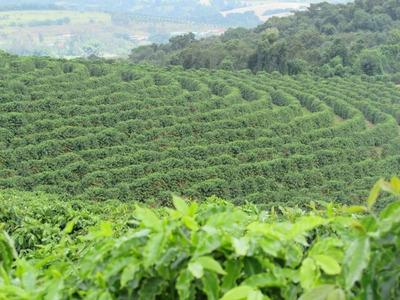 Fazenda Citrícos / Café - 127 Hectares - Monsenhor Paulo (mg) - 1524