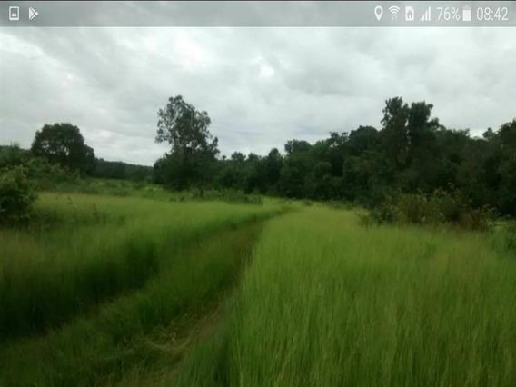 Fazenda À Venda Com 912 Ha Em Gurupi Tocantins - Rc14