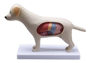 Anatomia Do Cachorro Veterinaria Animal