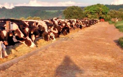 Fazenda Na Região De Descalvado Com 108 Alqueires Ou 259 Hectares À Beira Do Asfalto