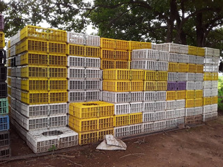 Cestas Para Cargar Aves (pollos, Pollonas, Gallinas, Gallos)