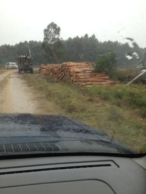Campo Forestado En Tarariras
