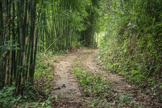 Terreno Em São Pedro Da Serra