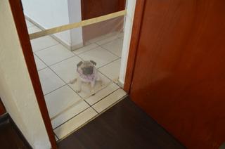 Red De Aislamiento Para Mascota Puerta Pasillo Corral
