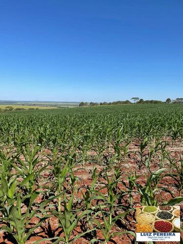 Imagem 1 de 5 de Fazenda À Venda Em Dourados Ms - De 535 Hectares (dupla Aptidão) - 1718