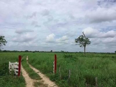 Rancho Ganadero Para Píe De Cría En Yucatán