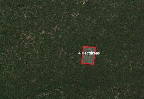 Imagen 1 de 4 de Terreno En Venta En Sierra Papacal De 4 Hectáreas