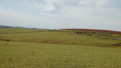Fazenda 1391 Hectares Região Assai (pr) - Cod: Mta1050
