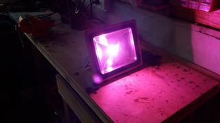 Led 50 Watts Full Spectrum Cultivo Indoor