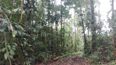 Venta De Terreno Agricola En Ucayali