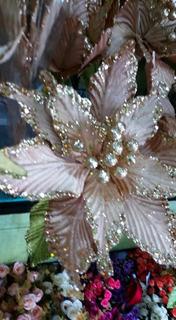Flor Nochebuena Planta Decorativa