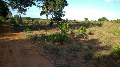 Fazenda A Venda Em Gurupi- To (pecuária) - 915