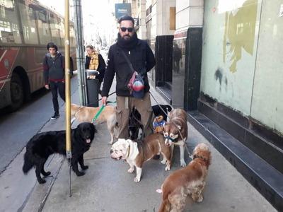 Paseador De Perros 35 Años Caminando Con Amigos