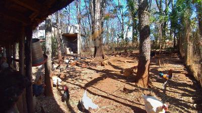 Chácara 2.520m2, Casa, Pomar, Criações, Piscinas, Jardinópolis - V55835