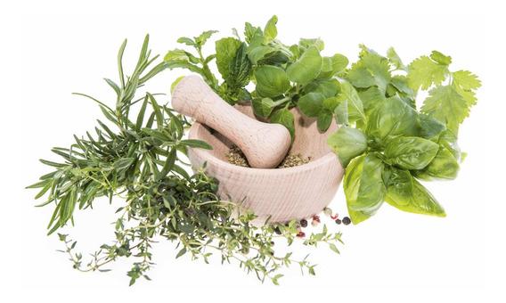 Pack 12 Especies Medicinales Semillas Para Huerto Medicinal