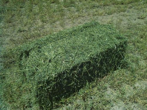Fardos Nuevo De Alfalfa Verdes
