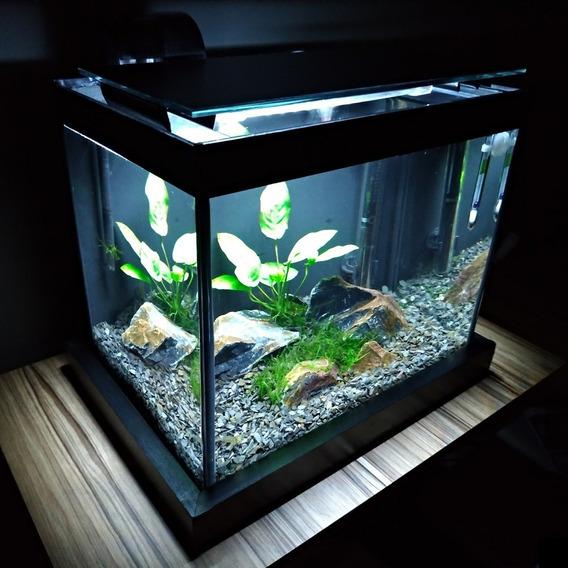 Aquário Quili Blackbox Q-15 15l + Luminária Led + Filtro