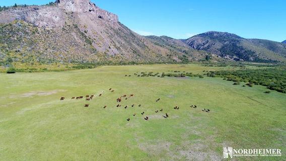 Campos En Venta -3.605 Ha En El Maitén, Provincias De Río Negro Y Chubut, Patagonia Argentina -campo Ganadero, Apto Forestación Y Turismo
