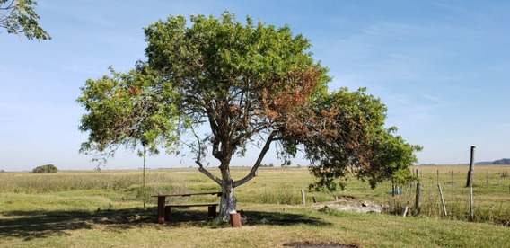 Fazenda A Venda No Bairro 20 Km De Rio Grande Em Rio Grande - 336-1