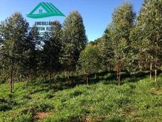 Fazenda A Venda No Bairro Zona Rural Em Baependi - Mg. - 207-1