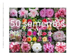 50 Sementes De Rosa Do Deserto Mix De Cores(90% Germinação