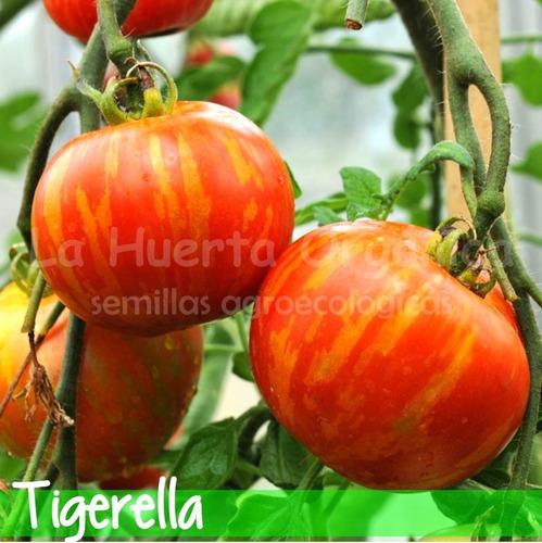 Semillas Tomate Tigerella! Variedad De Herencia O Heirloom