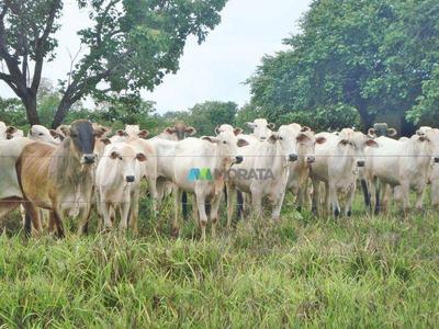 Fazenda Para Pecuária - 925 Ha - Região Joaquim Felício (mg) - Codigo: Fa0017 - Fa0017