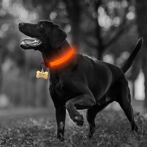 Collar Led Mascota Perro Gato Paseo Seguridad Talle L   L120