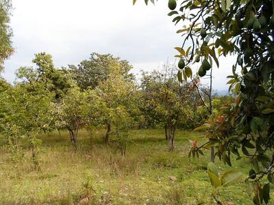 Terreno En Luricocha - Huanta - Ayacucho
