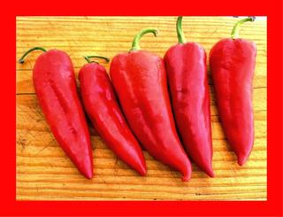 Pimenta Doce Italiana - Pimentão Pepper Capsicum 20 Sementes