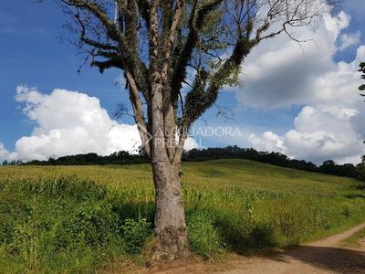 Terreno - Area Rural De Bento Goncalves - Ref: 288661 - V-288661