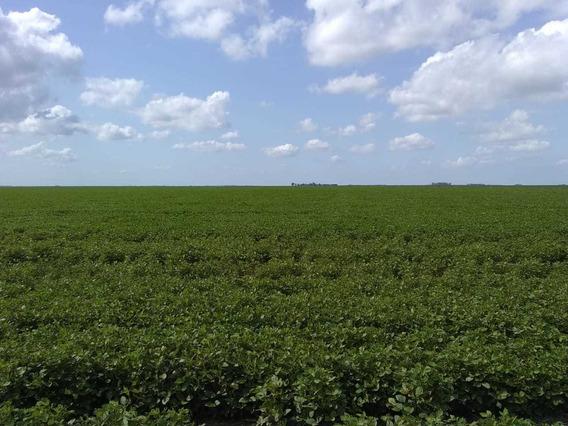 Campos Agrícola 2700 Hectáreas O Fracciones De 500 Hectáreas Zona Roque Seanz Peña