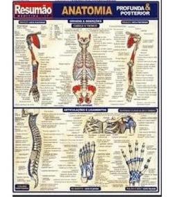 Mapa Livro Resumão Anatomia Profunda E Posterior Colorido