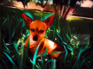 Exclusivo Cuadro En Lienzo De Perro Chihuahua 1m X 80cm