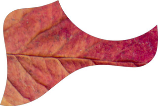 Escudo Palheteira Resinada Violão Aço Estilo Taylor Botanic
