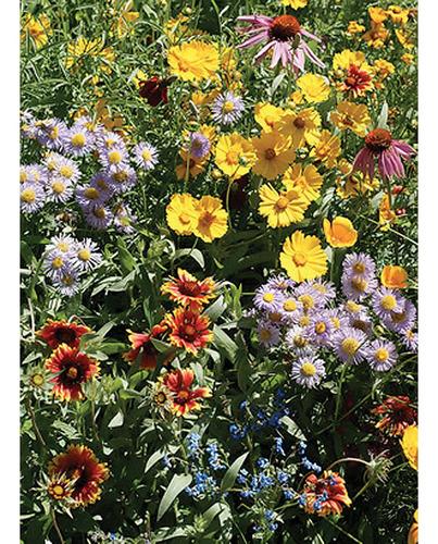 Imagem 1 de 1 de 100 Sementes Mix De Flores Para Atrair Abelhas Pasto Apicola