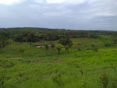 Fazenda Com Rio Correndo O Ano Inteiro (não Some Com A Seca)