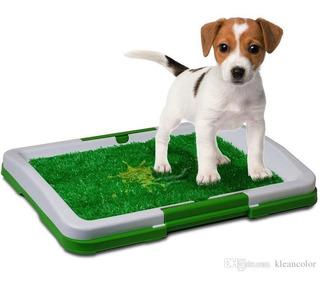 Tapete Baño Entrenador Para Mascotas Ideal Apartamentos