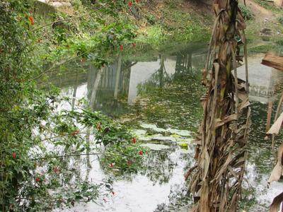 Terreno Frente Asfalto /lago/ Moradia/ref: 04684