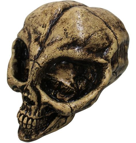 Imagen 1 de 1 de Decorativo Cráneo De Resina Alien Resin Skull