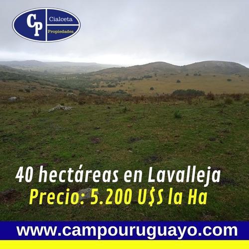 40 Hectáreas En Lavalleja Con Cañada Y Tapera