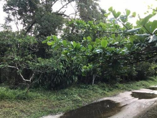 Imagem 1 de 4 de Terreno Para Chácara !! No Jardim São Fernando Itanhaém 7942
