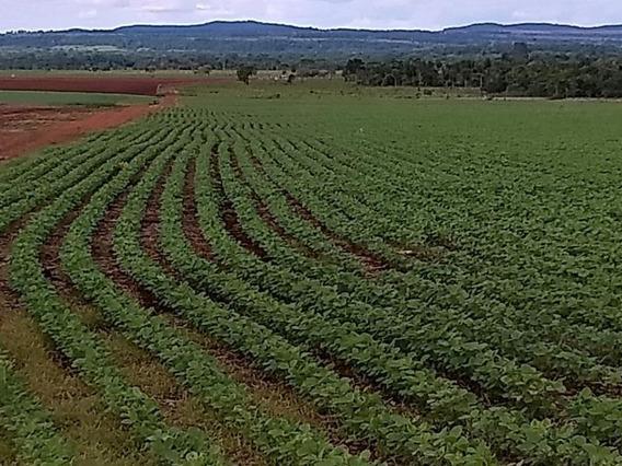 Fazenda Para Venda Em Maracaju, Centro - 1059