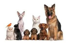Servicios Para Animales