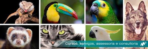 Comportamento Animal E Bem-estar - Cães, Aves, Gatos, Etc