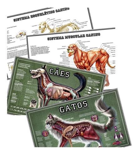 04 Posters 65x100cm Veterinária Anatomia Cachorro & Gato