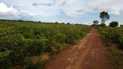 Fazenda A Venda Em Santa Tereza - To (dupla Aptidão ) - 554