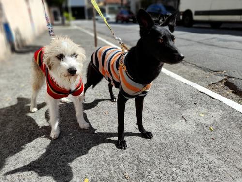 Imagem 1 de 5 de Passeador De Cães - Dog Walker
