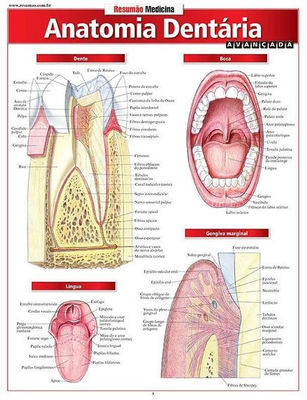 Resumão Medicina - Anatomia Dentária - Avançada
