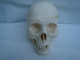 Cranio De Plastico